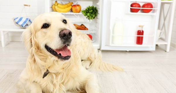 Clean pet accidents organically